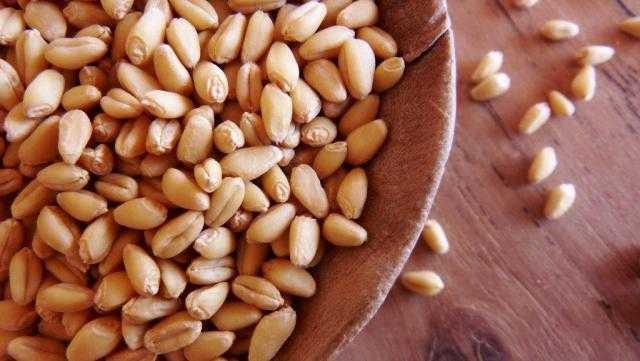 وزارة الزراعة الكندية : تراجع صادرات القمح إلى 2 مليون طن خلال 2021/2022