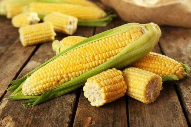 كيلو الذرة المستورد يبلغ 15 جنيهًا في السوق المحلي اليوم الأحد 19 سبتمبر 2021