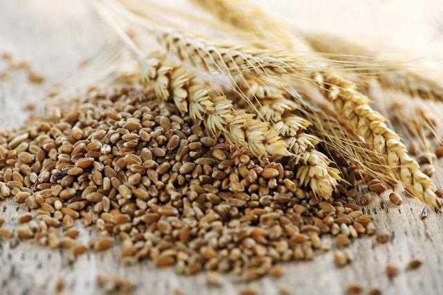 عقود القمح الآجلة في بورصة شيكاغو تحقق زيادة طفيفة ببداية تداولات اليوم