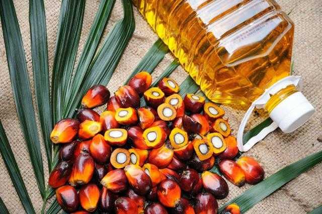 زيت النخيل يتراجع بمقدار 2.5 دولار في ظل عدم موافقة إندونيسيا على تصاريح زراعة النخيل