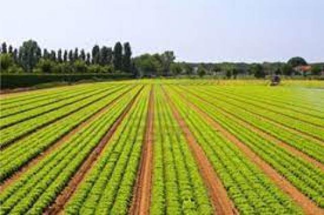 الاستصلاح الزراعي