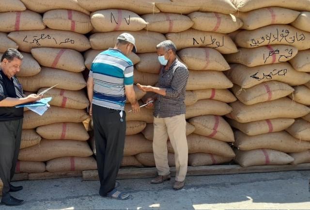 توزيع التقاوى على المزارعين