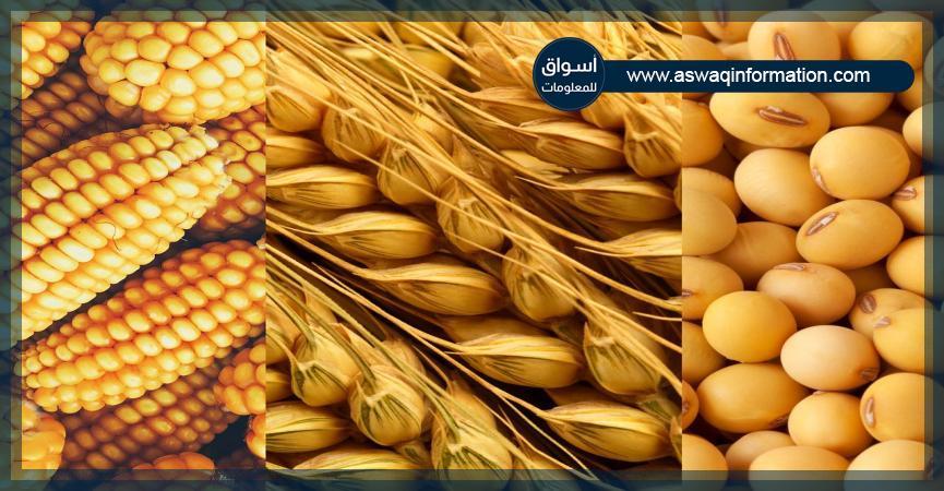 ذرة-قمح-بذرة الصويا