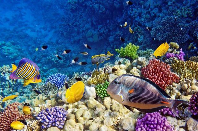 الشعب المرجانية