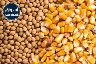 جمعية الإصلاح الزراعي بدكرنس تعلن عن ممارسة عامة لتوريد «ذرة صفراء - فول صويا»
