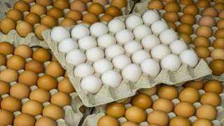 تعرف على أسعار البيض للمستهلك اليوم الإثنين 18 أكتوبر