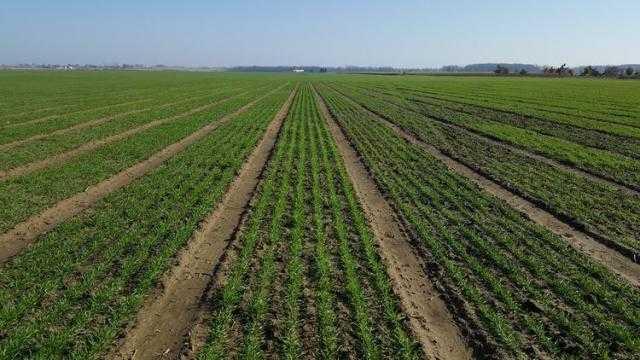 بيلاروسيا تزرع نحو 600 ألف هكتار من الحبوب الشتوية بالأسبوع الماضي