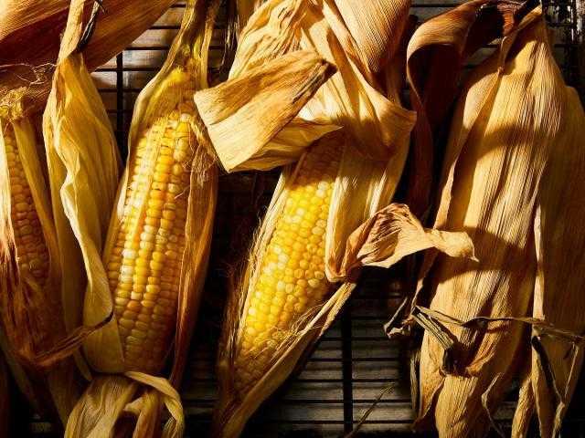 «Franceagrimer» تأخر حصاد الذرة الفرنسية الإسبوعية بنحو 14% على أساس سنوي