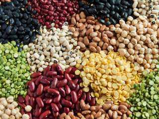 تضاعف مخزون البذور الزيتية في كازاخستان