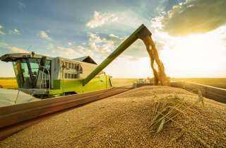 انخفاض صادرات الحبوب والبذور الزيتية الروسية بنسبة 15٪ على أساس سنوي