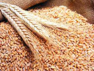 صعود عقود القمح الآجلة بنهاية جلسة الإثنين 18 أكتوبر