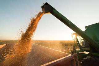السلع التموينية توقف الميزة السعرية لشركة الملاحة الوطنية في شحنات استيراد القمح
