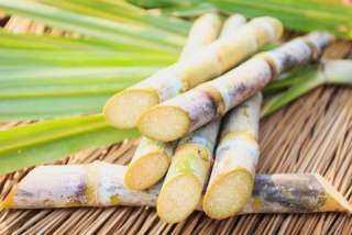 محافظة قنا تستحوذ على 37% من زراعة قصب السكر بإنتاج بلغ 3 ملايين طن