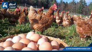 تعرف على أسعار البيض بالمزرعة الأربعاء 27 أكتوبر 2021
