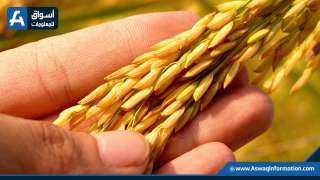 تعرف على أسعار الأرز في السوق المحلي والعالمي الأربعاء 27 أكتوبر 2021